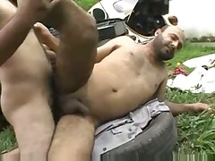 Brasilian Bears